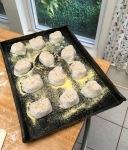 sourdough roll cookie sheet